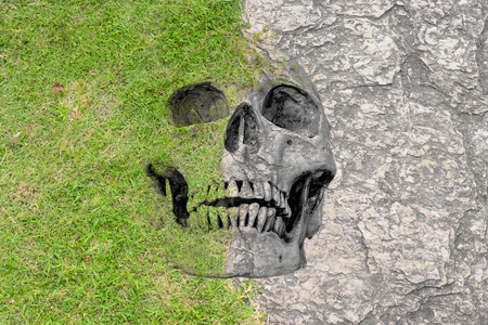 no1: abstract symbol idea, Disparity Soft Hard and life, skull in short grass lawn and seamless rock texture. Disparity of life No.1 2016 Stock Photo