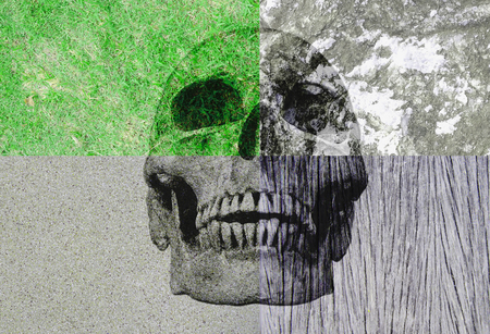 human factors: abstract symbol idea, The different four factors of human life, Human skull in the four different background,grass rock, wood, cement. The different four factors No2. 2016 Stock Photo