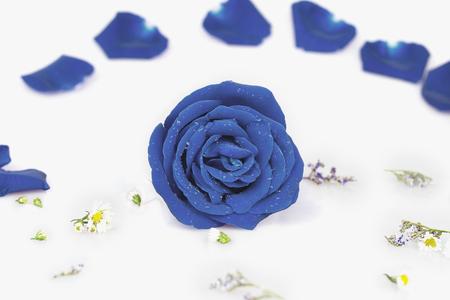 vehement: Dye blue rose with Rose petals, pastel color