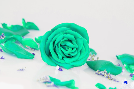 comely: Dye green rose with Rose petals Stock Photo