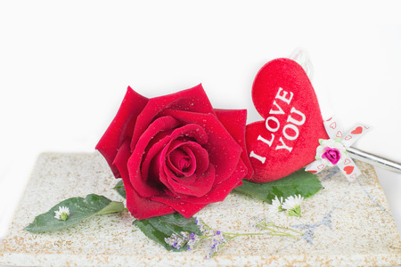 vehement: Red rose on plate with white background Stock Photo