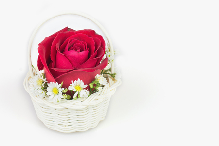 comely: Red rose gift card with a white background