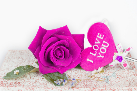 vehement: pink rose on plate with white background Stock Photo