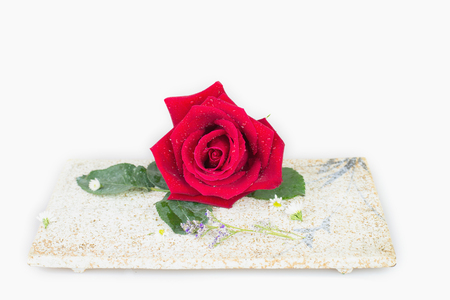 comely: Red rose on plate with white background Stock Photo