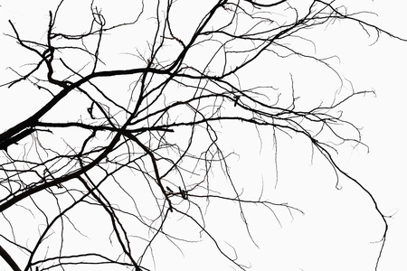 Abstract symbol idea. The sadness of the tree,Natural  silhouette of a leafless branch. Stock Photo