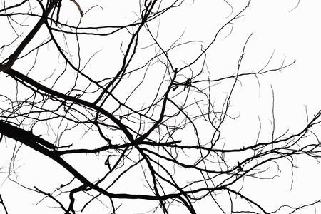 dode bladeren: Abstract symbool idee. Het verdriet van de boom, Natural silhouet van een kale tak.
