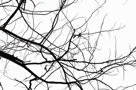 toter baum: Zusammenfassung Symbol Idee. Die Traurigkeit des Baumes, nat�rliche Silhouette eines kahlen Zweig. Lizenzfreie Bilder