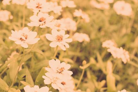 White flower field select focus background blur vintage color