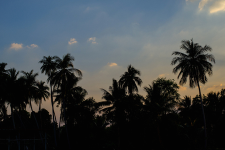 Silhouetted of coconut tree and sky