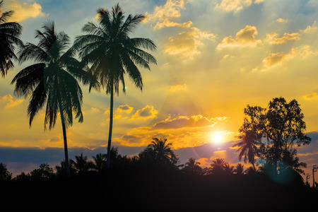 Silhouetted of coconut tree during sunset effect lens flare Stock fotó