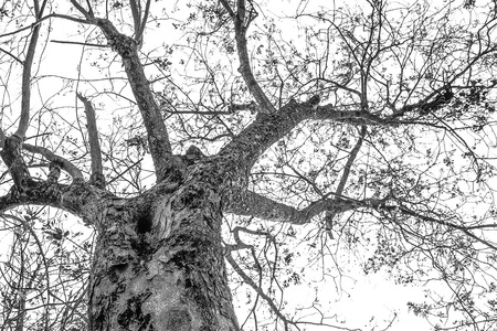 Details of tree branches view quaint white background