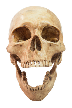 front view of human skull on isolated white background,clipping path