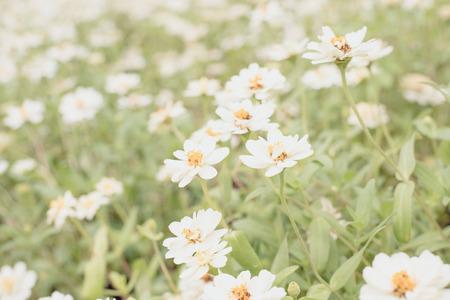 White flower field select focus background blur