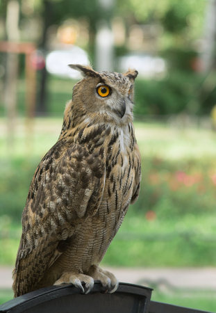 Owl sits on a stand, against a background of green grass