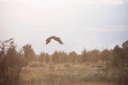 Stork photo