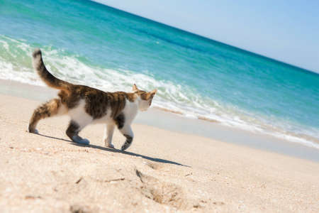 Ð¡at walks on the beach Standard-Bild