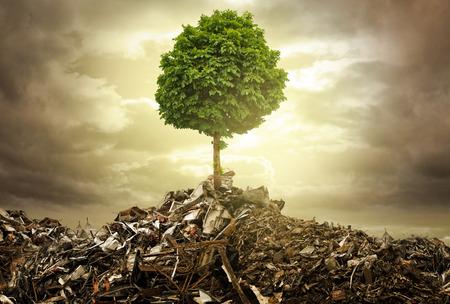 sustentabilidad: Sobrevivir a