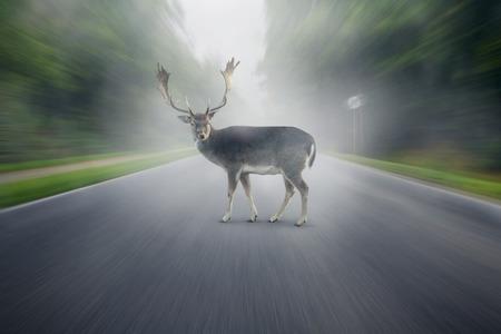 Deer on the street photo