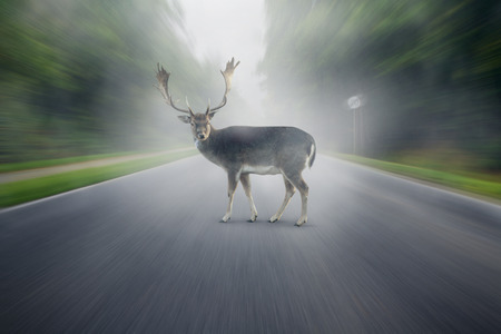 Deer on the street
