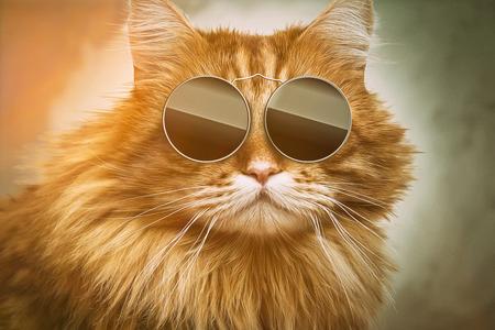 クールな猫