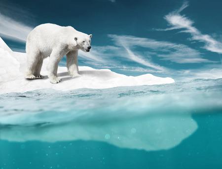 Polar Bear Foto de archivo