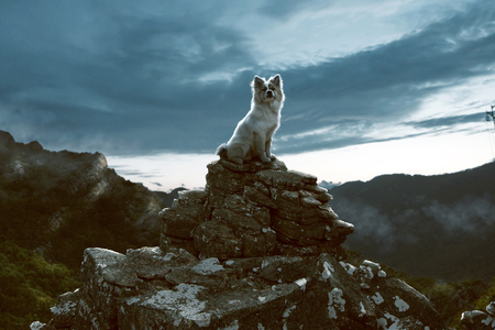 Dog sits on a rock in the mountains Stock Photo