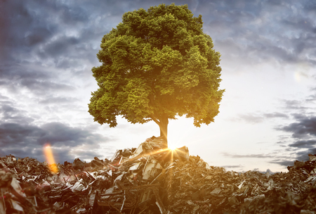 Tree grows between Mountains of Trash Reklamní fotografie - 75280567