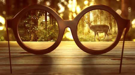 Glasses laying on a table in the forest