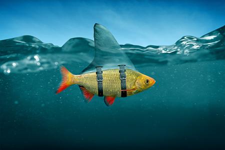Petit poisson à la menthe au requin Banque d'images