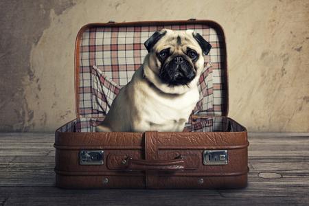 スーツケースでパグ