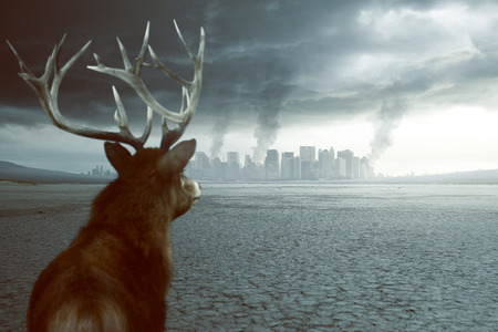 Lonely deer sees destruction Stock Photo