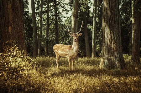 deer in the forest Stock Photo