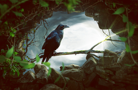 Raven sitting on a branch 免版税图像 - 75557410