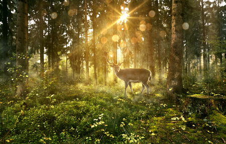 Sun shines into a fairytale forest 스톡 콘텐츠
