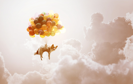 Dog with balloons in theaven