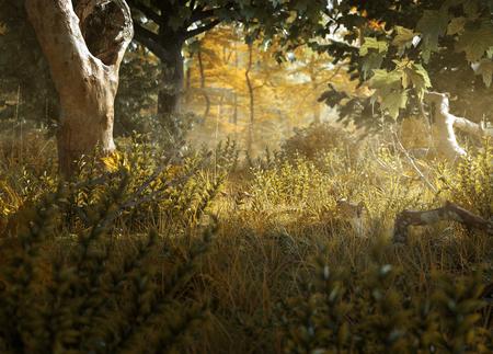 Belle clairière de forêt