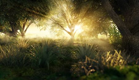 Clearing in the morning sun (3D Rendering)
