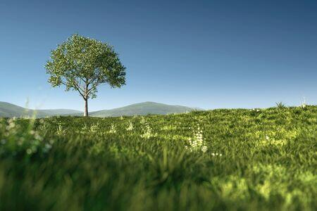 Green meadow with single tree