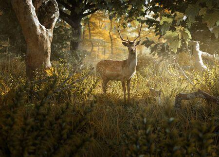 Curios deer stands in a forest clearing Zdjęcie Seryjne - 137086658