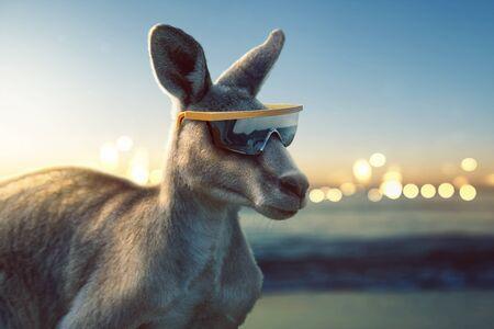 Kangaroo with sunglasses by the sea