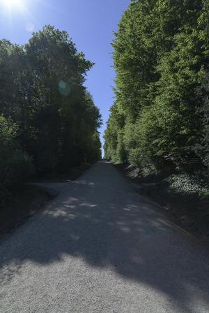 nbrunn: A pedestrian walkway in a lush  forest part in Schnbrunn