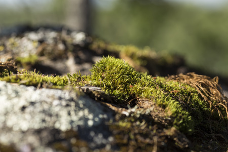 sweden resting: A closer look at some moss on a stone