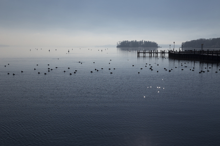 birds lake: Some birds in a lake and a pier Stock Photo