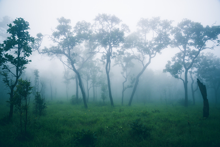 Wallpaper background garden park outdoor In the Mist.thailand Tropical forests Stock Photo