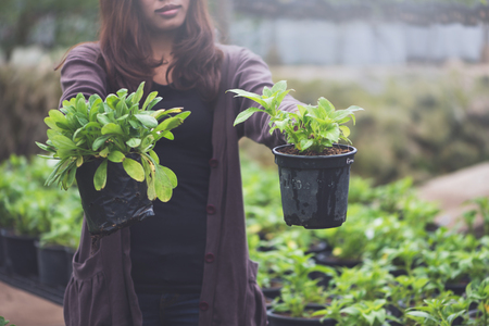 Greenhouse flower seedlings. The young womans hand holding a flower pot.