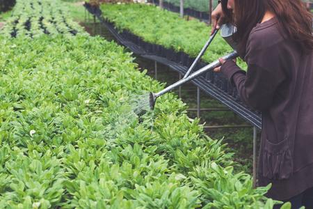 Greenhouse flower seedlings. Hand watering a flower seedlings. watering can