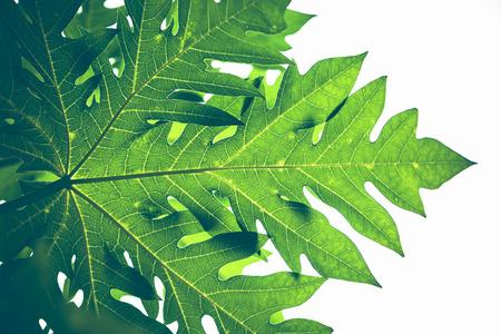 自然背景バナナ リーフ グリーン。明るい、カラフルな葉 写真素材