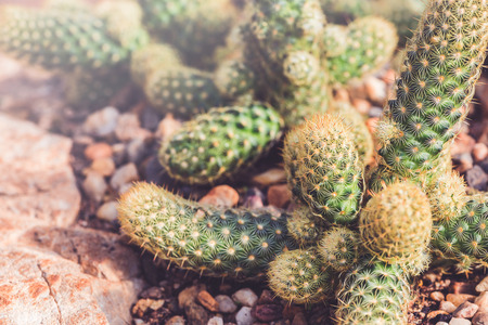 background nature. Natural background Cactus succulent plant. Stock Photo