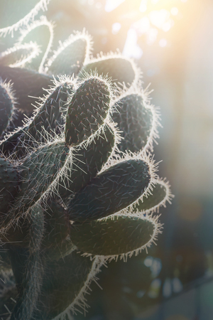 background nature. Natural background Cactus succulent plant. sunlight