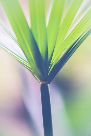 Natural background green leaves. sunlight leaf.Cyperaceae